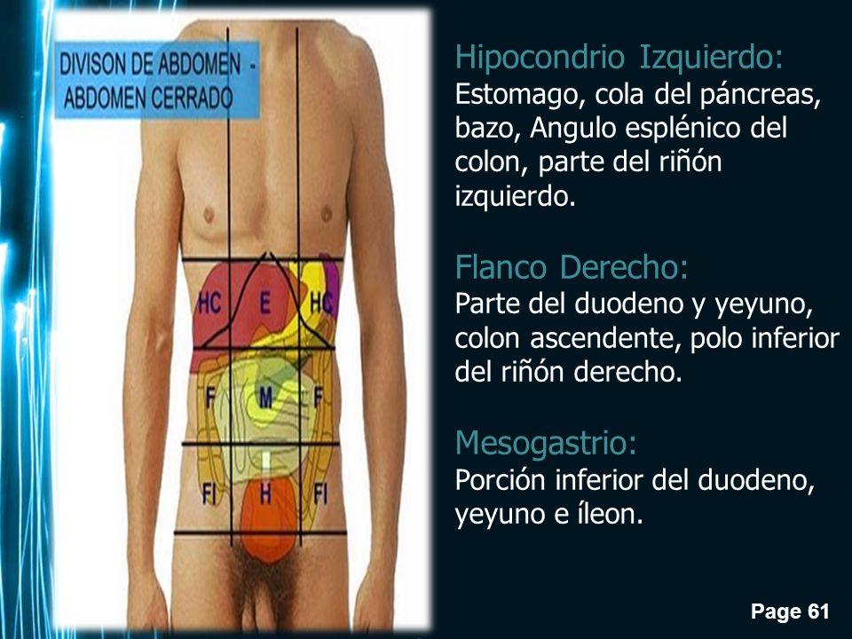 Atractivo Anatomía Del Abdomen Inferior Izquierdo Regalo - Anatomía ...