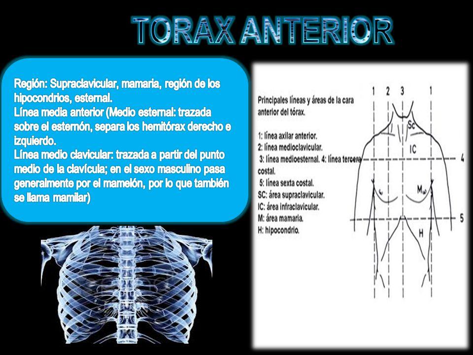 TORAX ANTERIOR