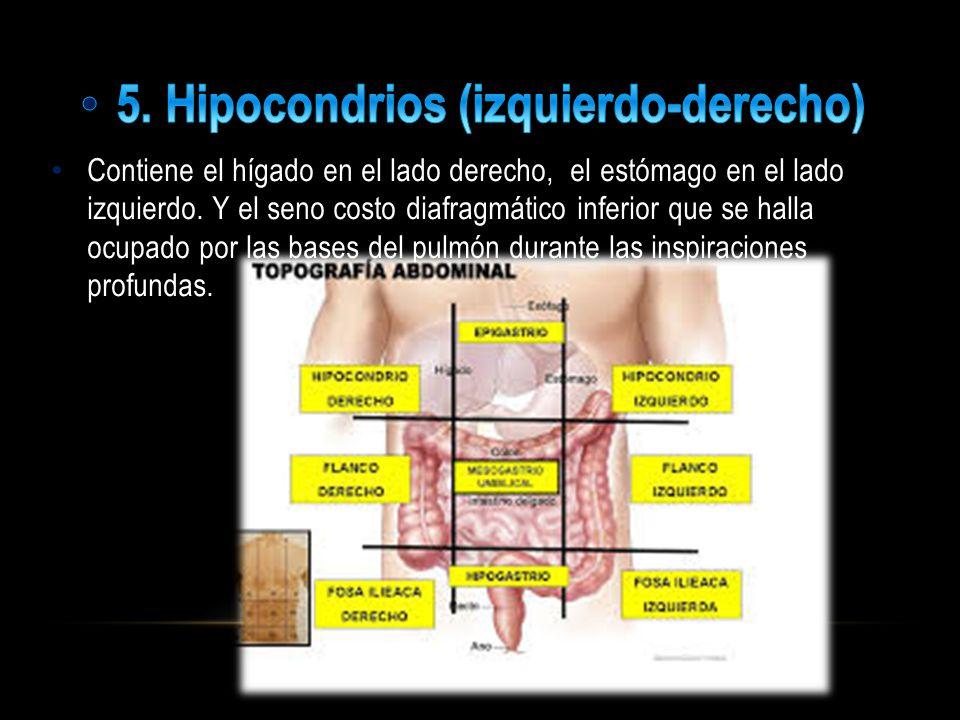 5. Hipocondrios (izquierdo-derecho)