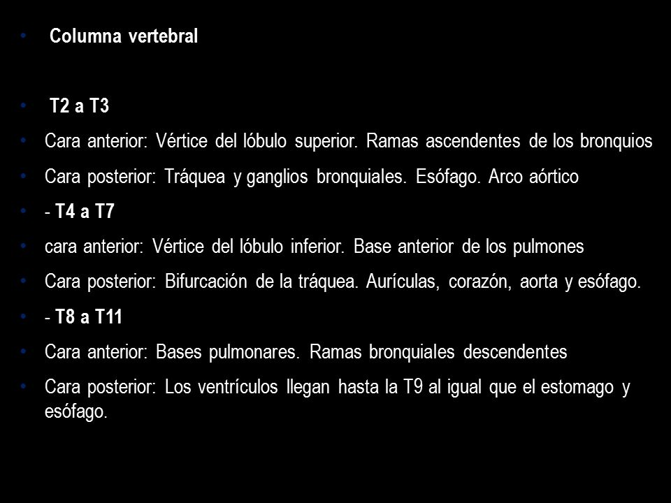 Columna vertebral T2 a T3. Cara anterior: Vértice del lóbulo superior. Ramas ascendentes de los bronquios.