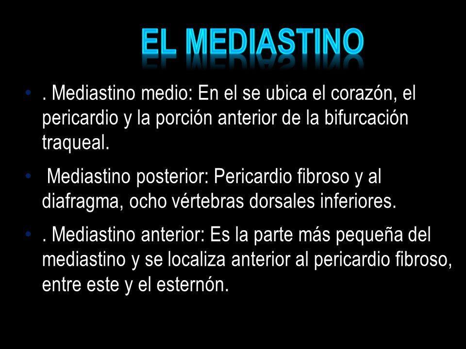 EL MEDIASTINO . Mediastino medio: En el se ubica el corazón, el pericardio y la porción anterior de la bifurcación traqueal.