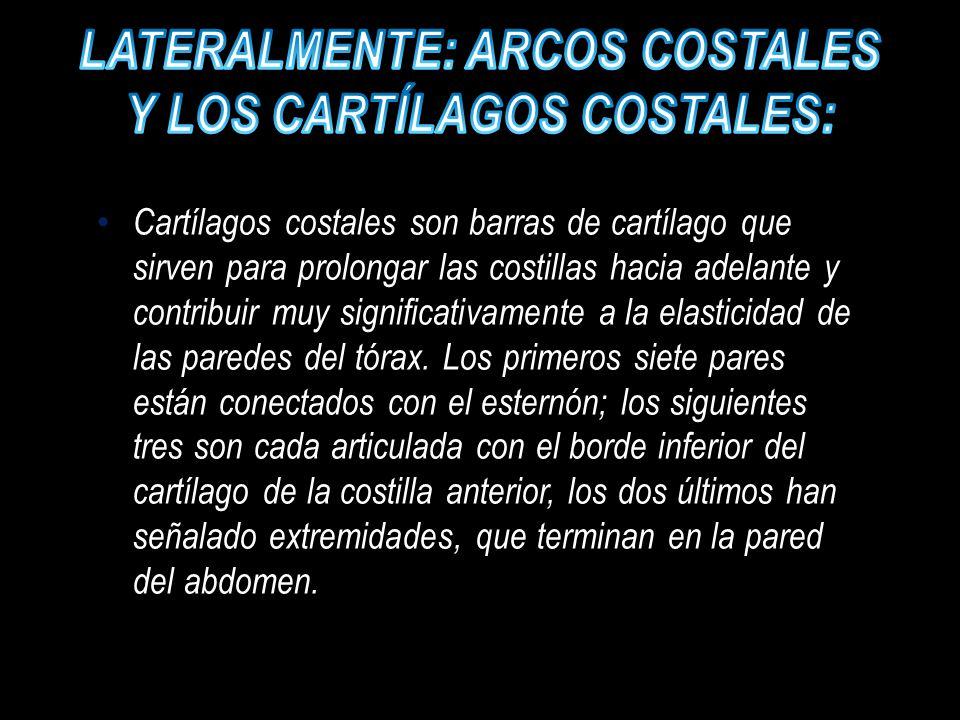 Lateralmente: arcos costales y los cartílagos costales: