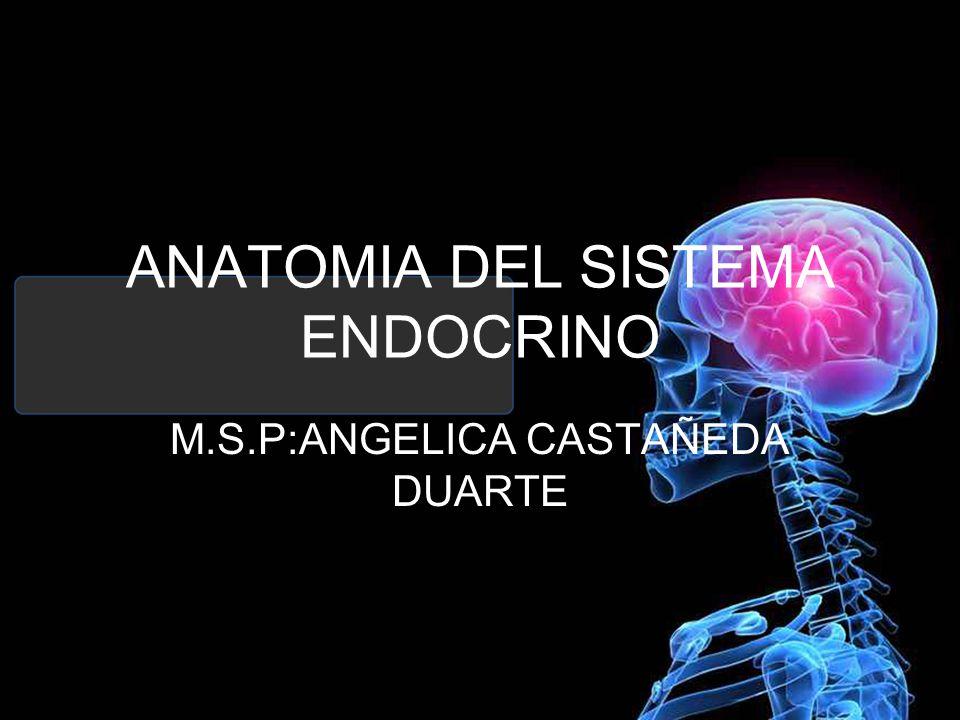 Perfecto Sistema Endocrino Anatomía Y La Fisiología Ppt Inspiración ...