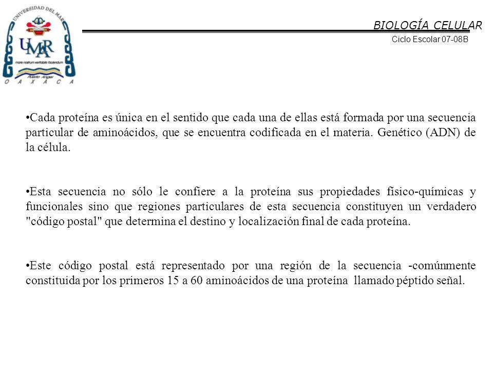 BIOLOGÍA CELULAR Ciclo Escolar 07-08B.