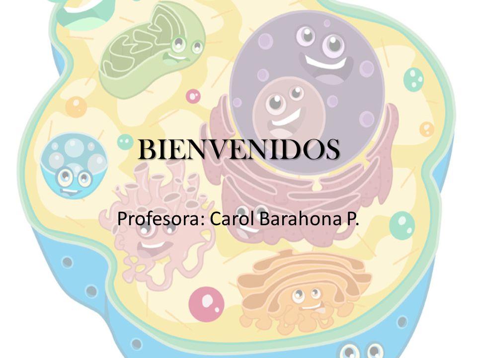 Profesora: Carol Barahona P.