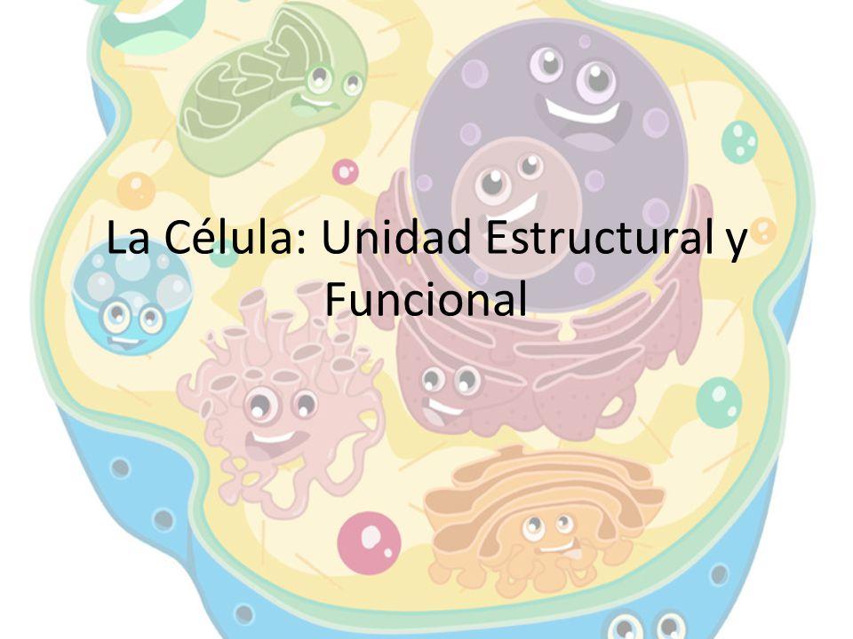 La Célula: Unidad Estructural y Funcional