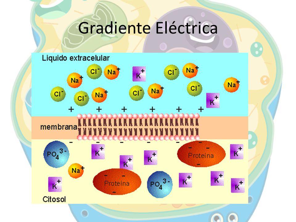 Gradiente Eléctrica