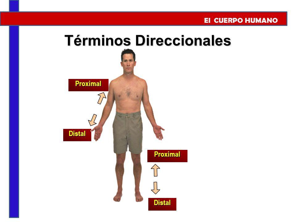 Términos Direccionales