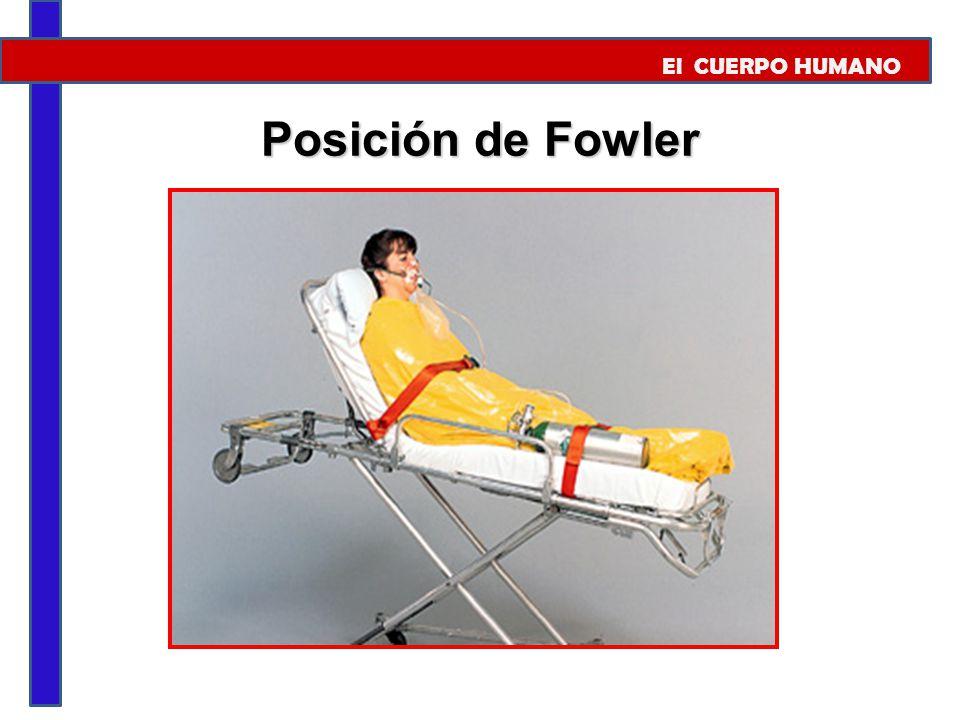 El CUERPO HUMANO Posición de Fowler