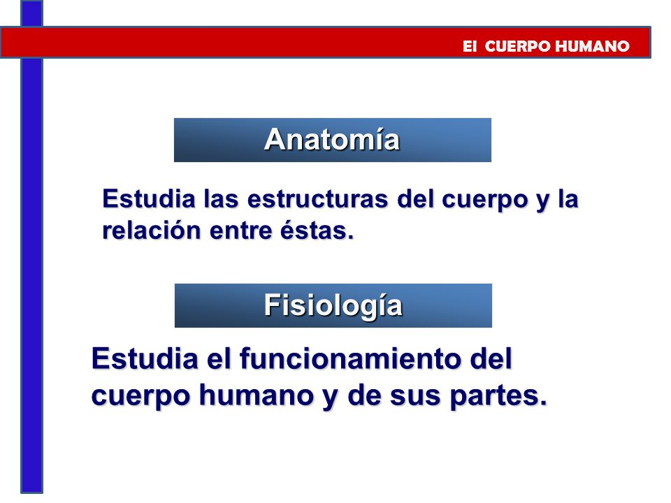 Estudia el funcionamiento del cuerpo humano y de sus partes.