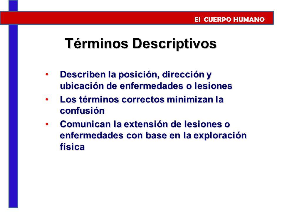 Términos Descriptivos