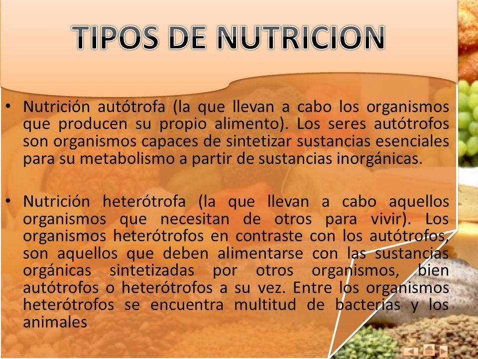 TIPOS DE NUTRICION