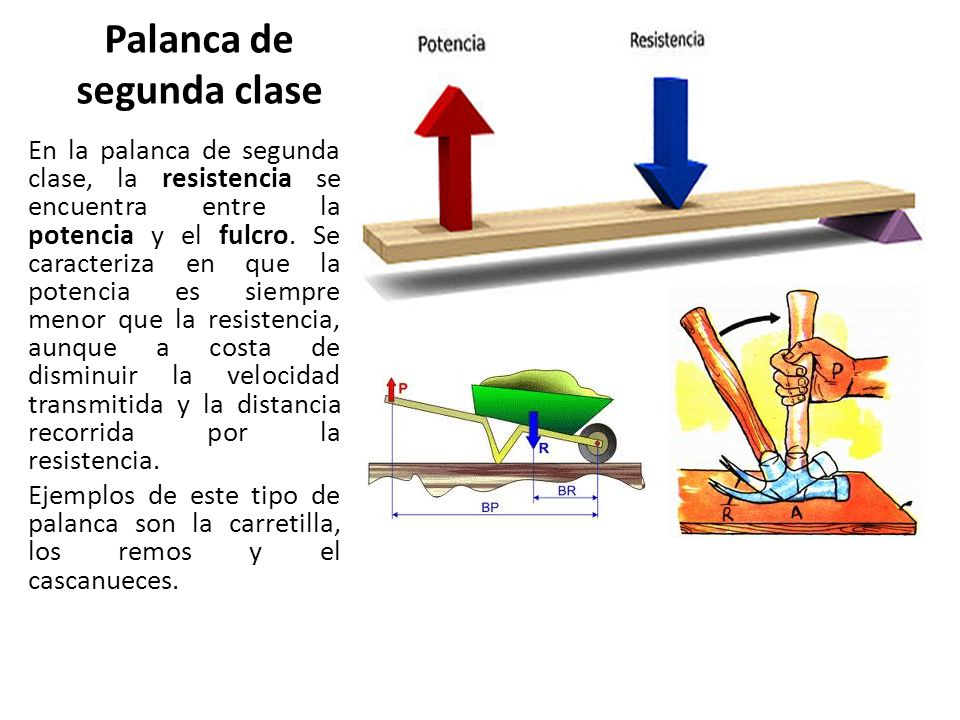Famoso Segunda Palanca De Clase Elaboración - Imágenes de Anatomía ...