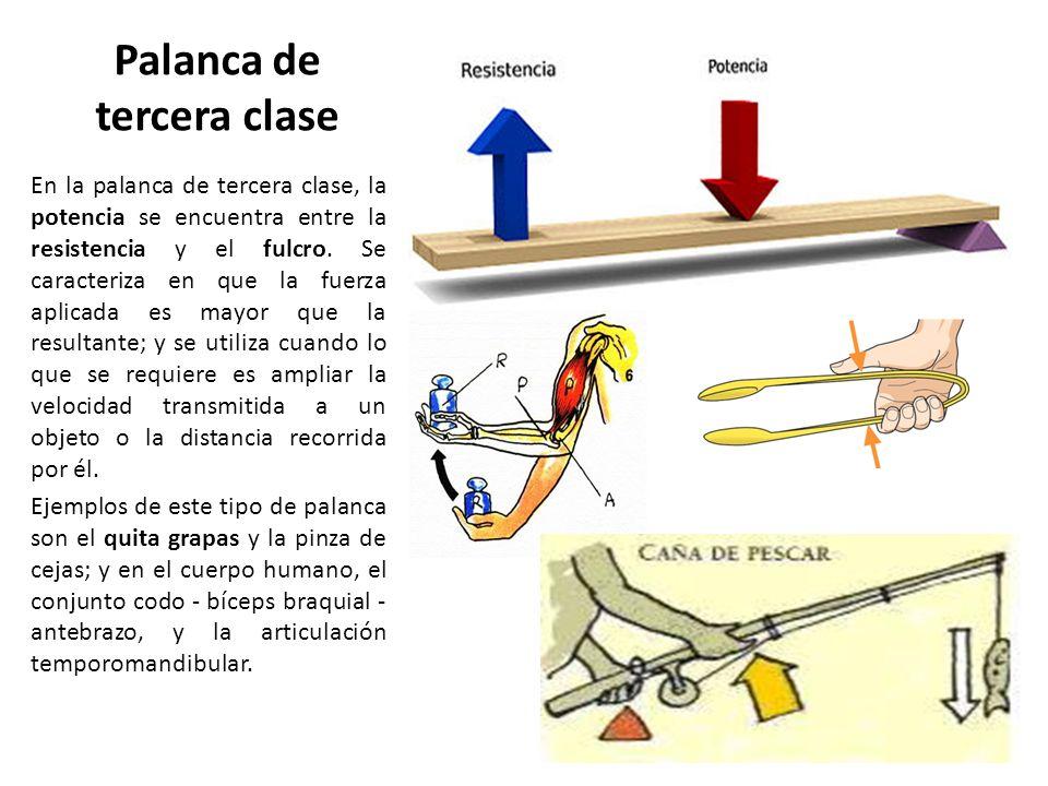 Encantador Tercera Palanca De Clase Colección - Anatomía de Las ...