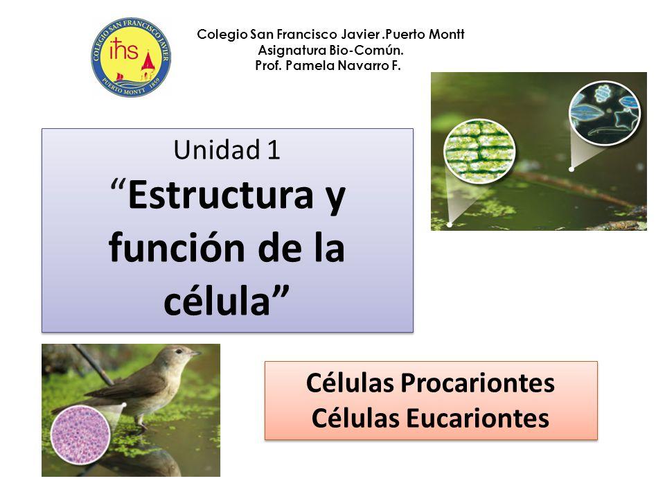 Células Procariontes Células Eucariontes - ppt video online descargar