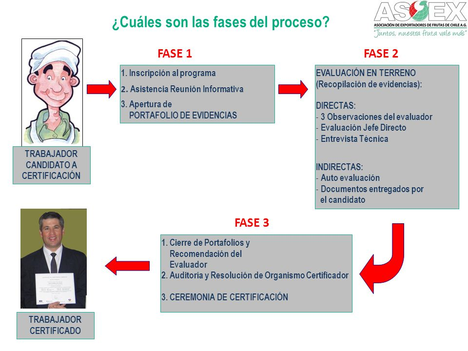 ¿Cuáles son las fases del proceso