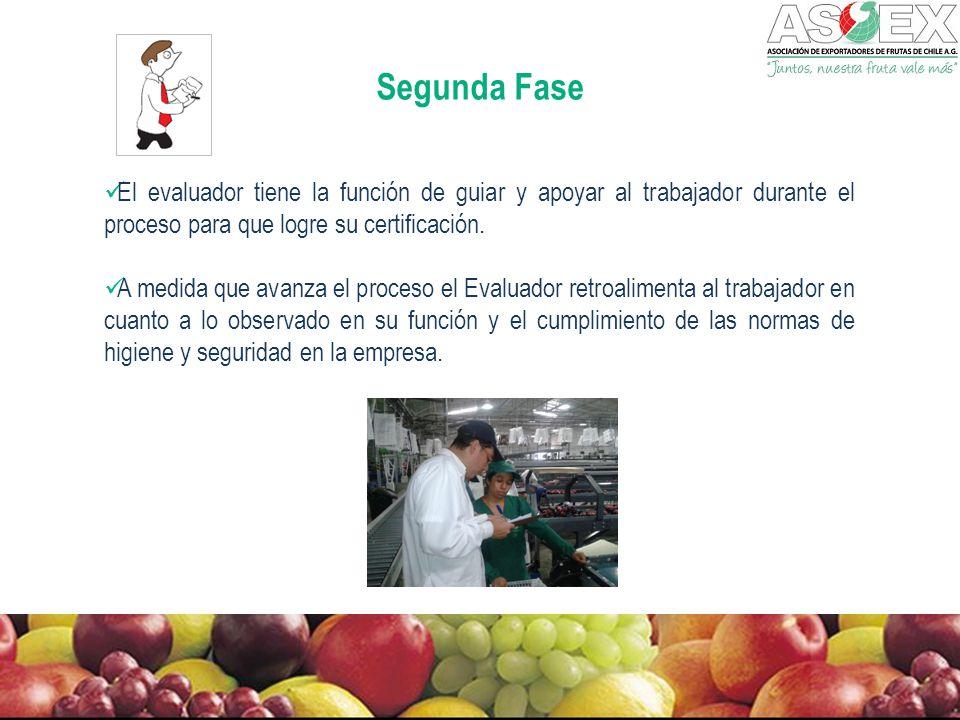 Segunda Fase El evaluador tiene la función de guiar y apoyar al trabajador durante el proceso para que logre su certificación.