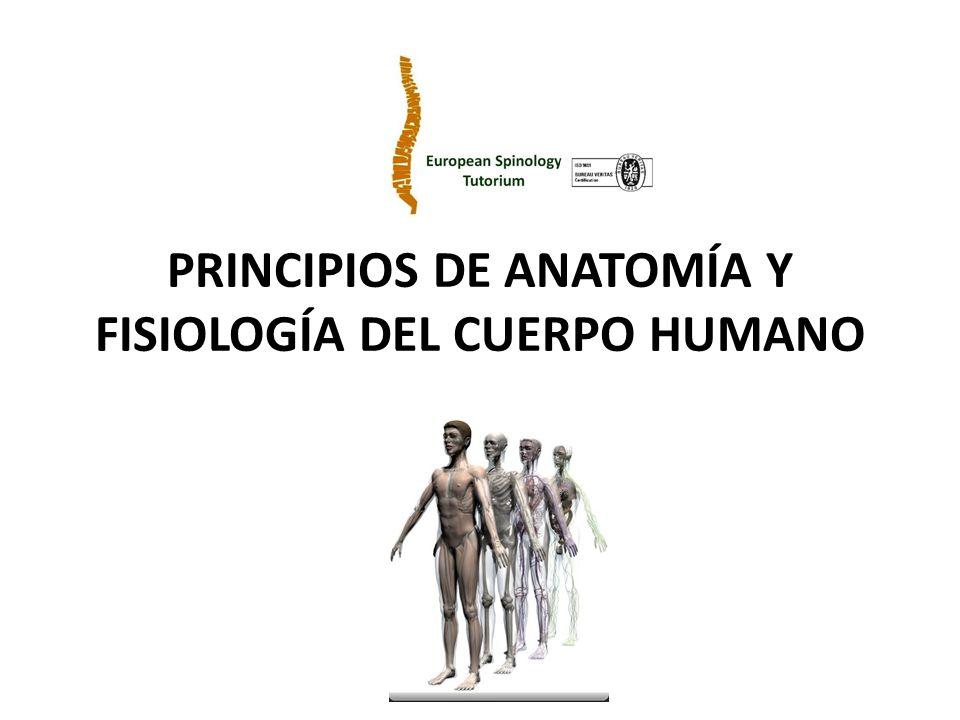 PRINCIPIOS DE ANATOMÍA Y FISIOLOGÍA DEL CUERPO HUMANO - ppt video ...