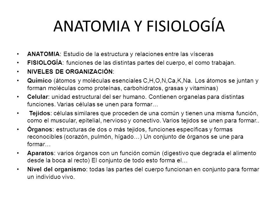 Moderno Nivel 2 Anatomía Y Fisiología Cresta - Anatomía de Las ...