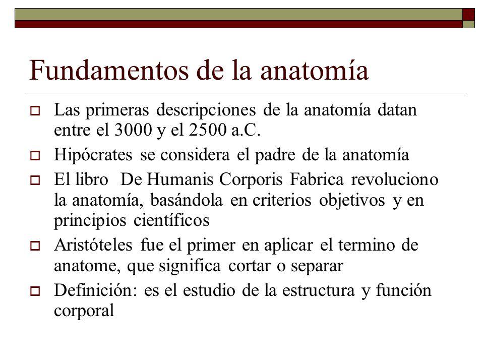 Fundamentos de la anatomía