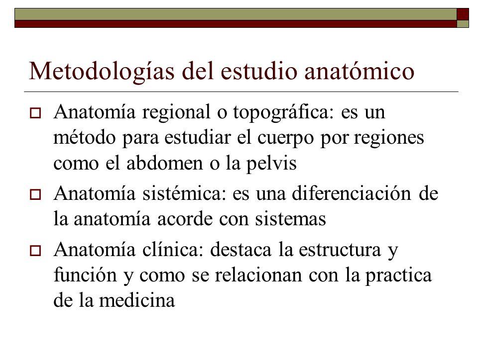 Metodologías del estudio anatómico