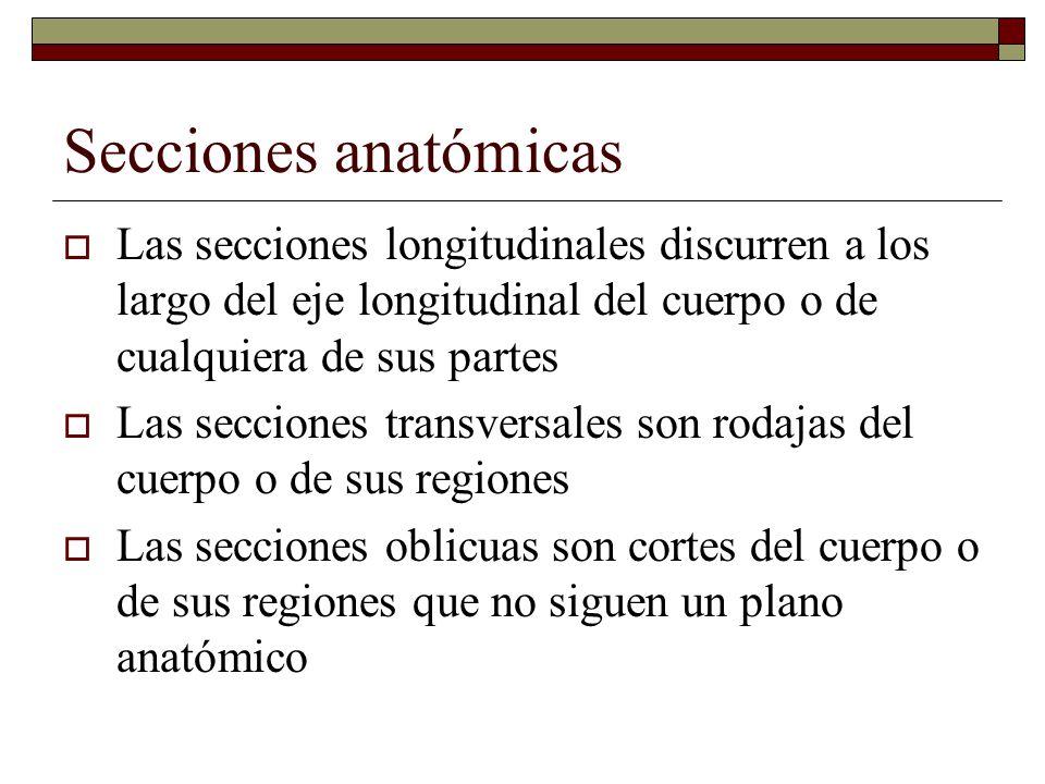 Secciones anatómicas Las secciones longitudinales discurren a los largo del eje longitudinal del cuerpo o de cualquiera de sus partes.