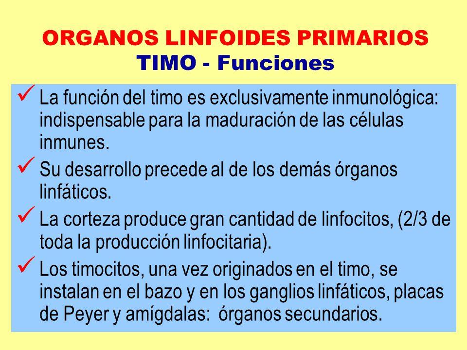 Encantador Función Del Timo Ilustración - Anatomía de Las ...