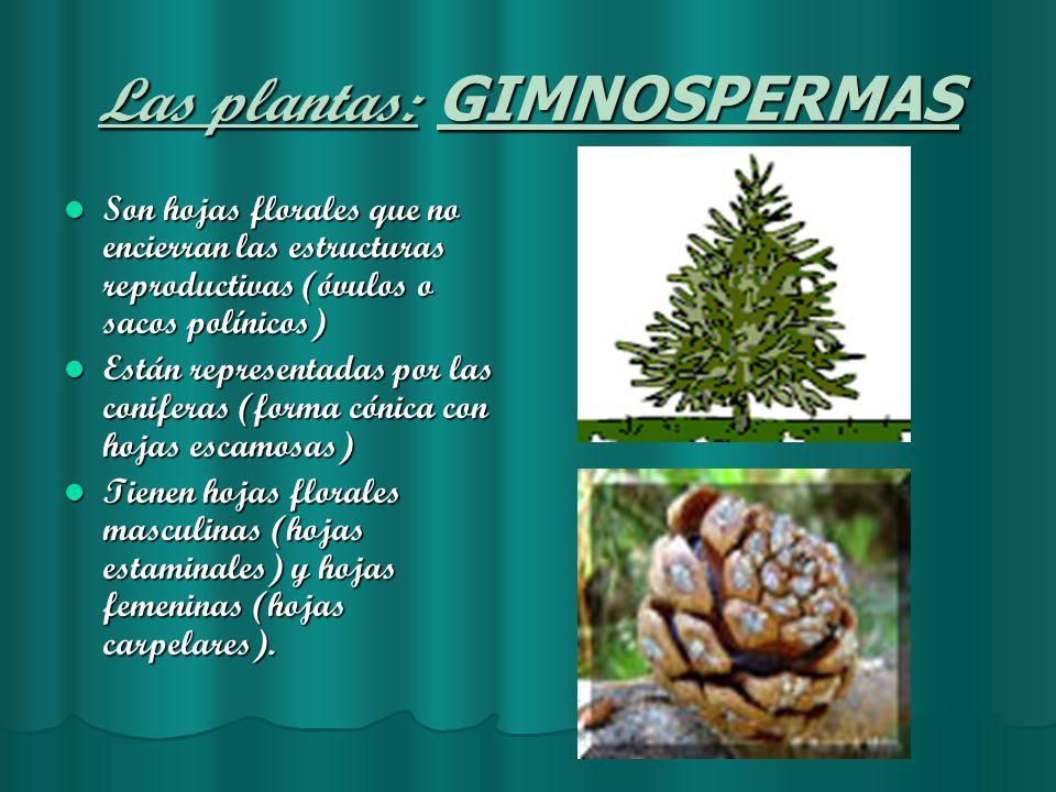 Metafitas el reino de las plantas ppt video online for Que son plantas ornamentales ejemplos