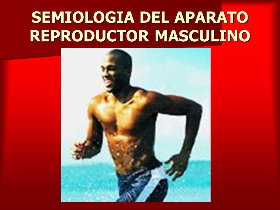 SEMIOLOGIA DEL APARATO REPRODUCTOR MASCULINO