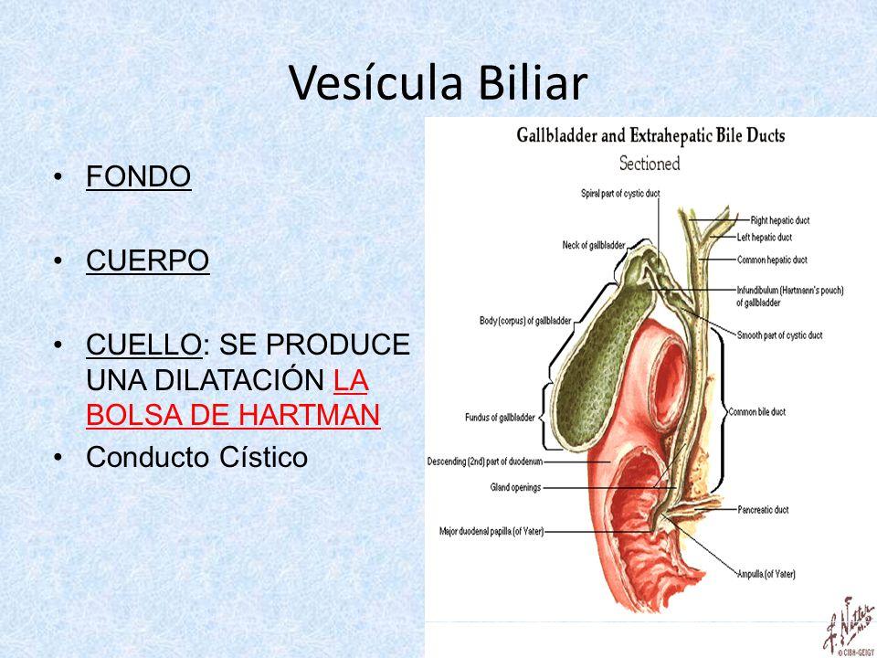 Hermosa Hechos De La Vesícula Biliar Fotos - Anatomía de Las ...
