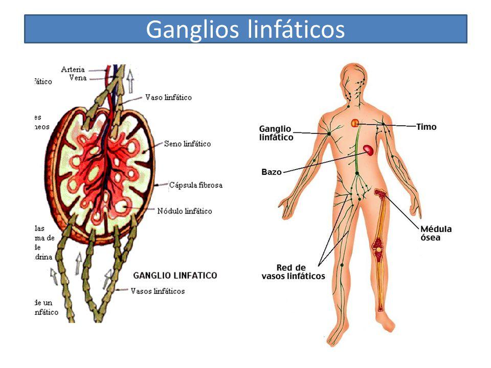 Magnífico Diagrama De Los Ganglios Linfáticos En El Cuerpo ...