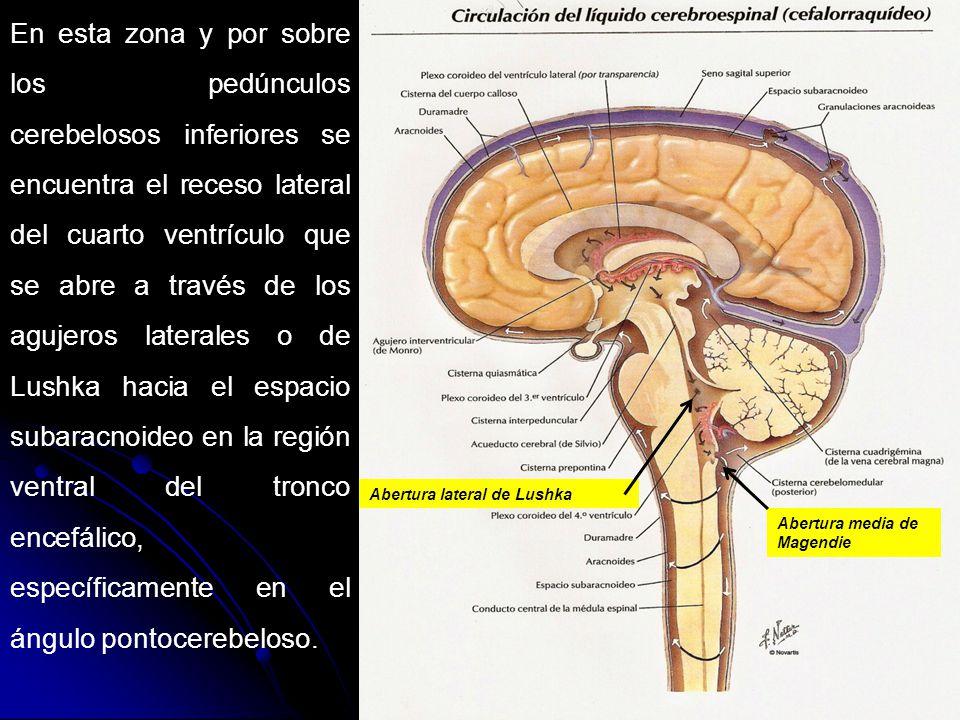 Meninges liquido cefalorraqu deo ppt video online descargar for Agujeros en el cuerpo
