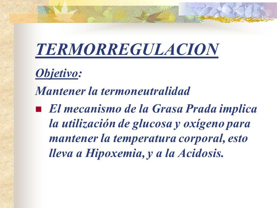 TERMORREGULACION Objetivo: Mantener la termoneutralidad