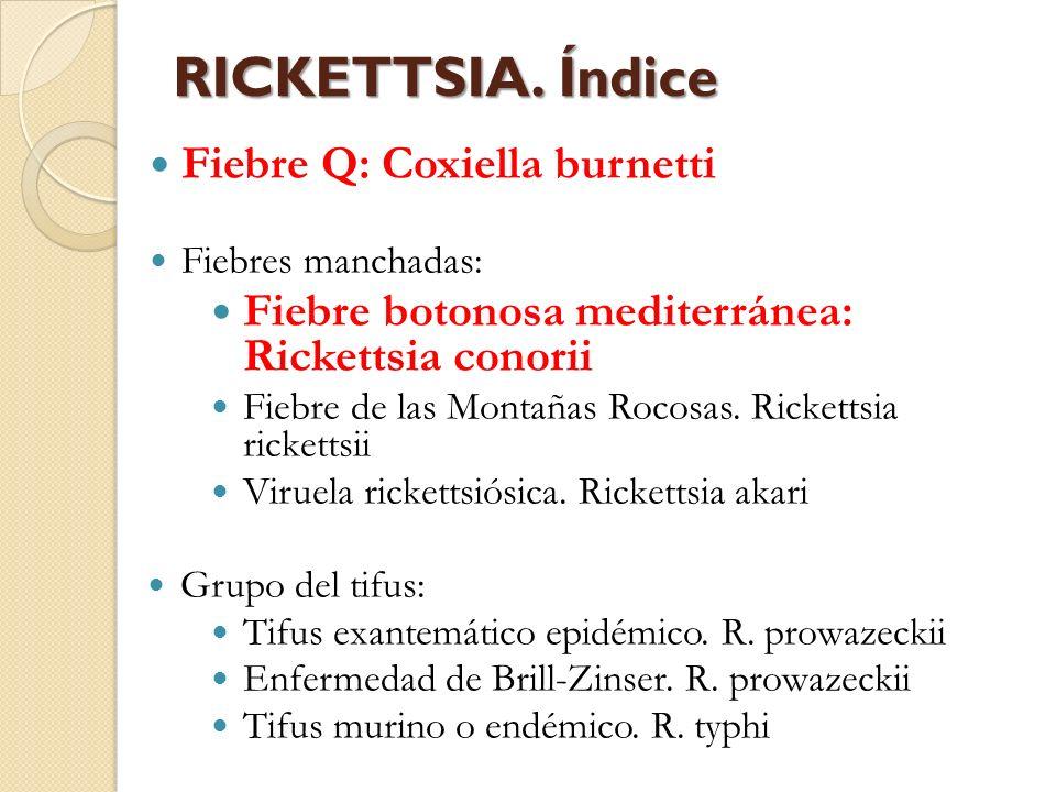 RICKETTSIA. Índice Fiebre Q: Coxiella burnetti