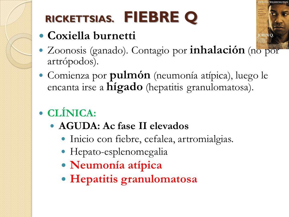 Coxiella burnetti Neumonía atípica Hepatitis granulomatosa