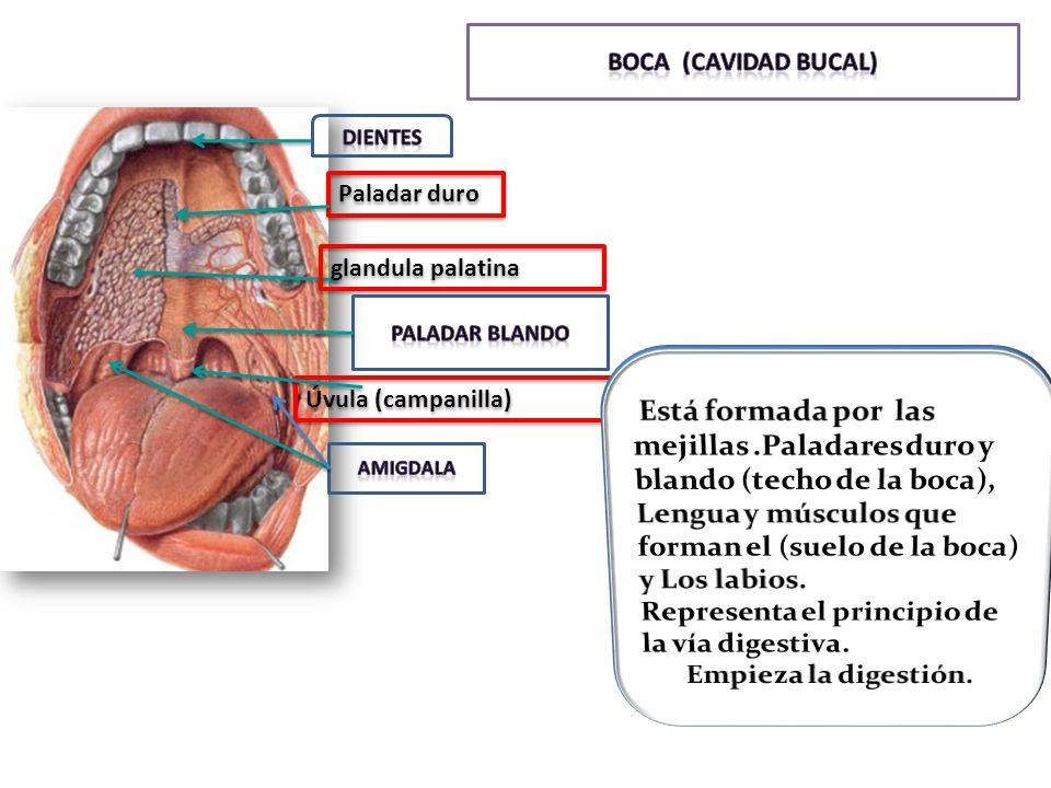 Vistoso Anatomía De Un Techo Bosquejo - Imágenes de Anatomía Humana ...