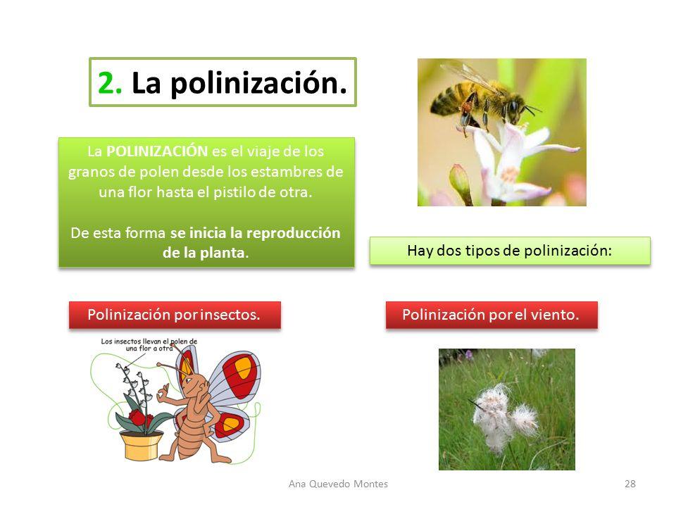 Ud 3 las plantas el casta o el casta o es un rbol for Cuales son los tipos de plantas