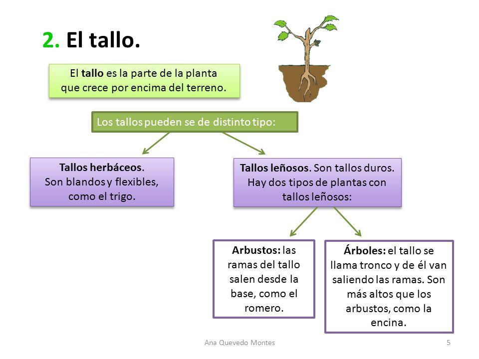 Ud 3 las plantas el casta o el casta o es un rbol for Como se llaman los arboles que no pierden sus hojas