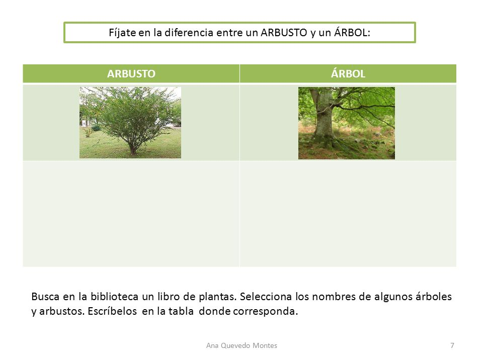 Ud 3 las plantas el casta o el casta o es un rbol for Diferencia entre arboles de hoja caduca y hoja perenne
