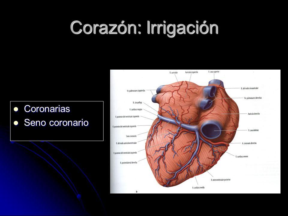Único La Anatomía Del Corazón Seno Coronario Componente - Anatomía ...