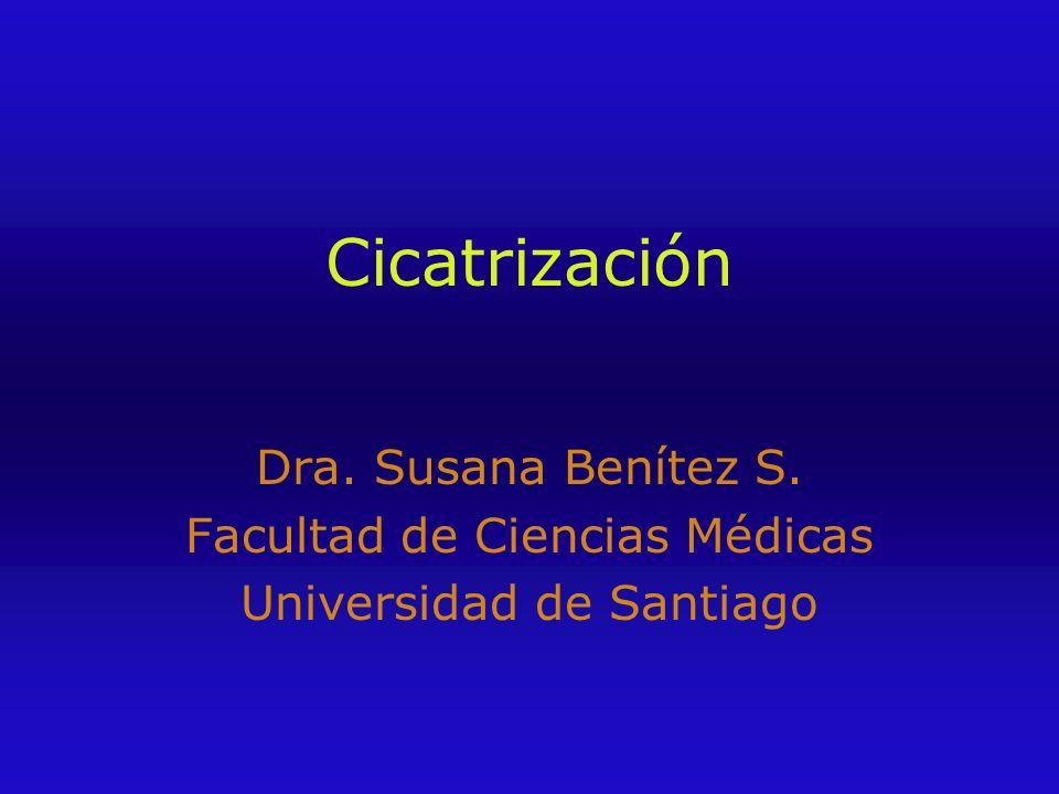 Cicatrización Dra. Susana Benítez S. Facultad de Ciencias Médicas