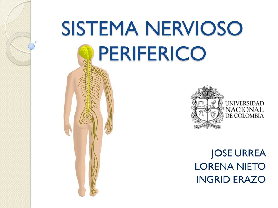 SISTEMA NERVIOSO PERIFERICO - ppt video online descargar
