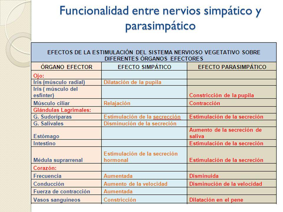Funcionalidad entre nervios simpático y parasimpático