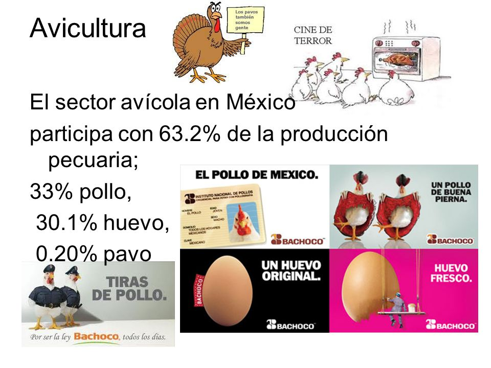 Avicultura El sector avícola en México