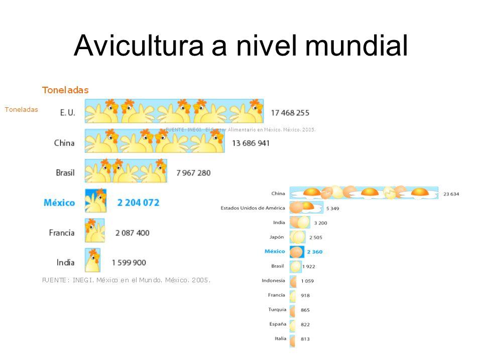 Avicultura a nivel mundial