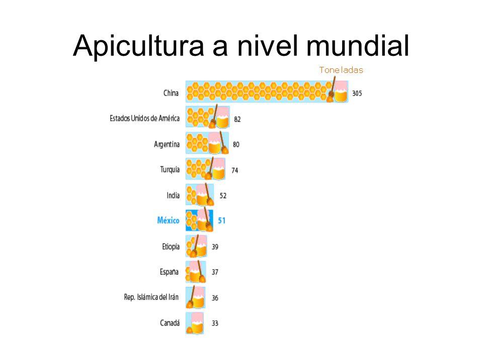 Apicultura a nivel mundial