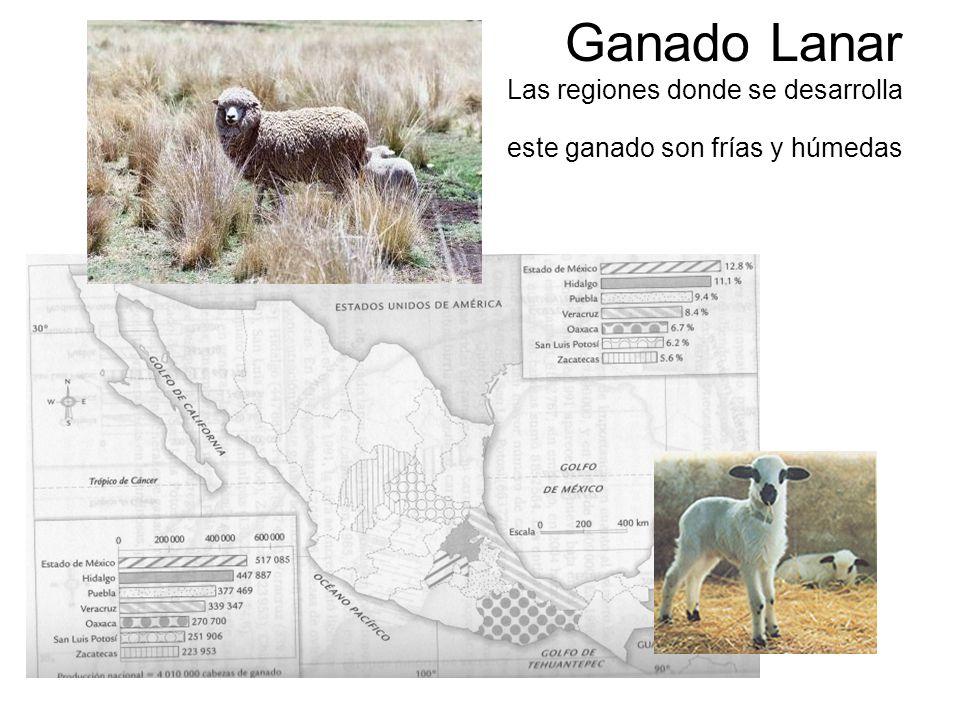 Ganado Lanar Las regiones donde se desarrolla este ganado son frías y húmedas
