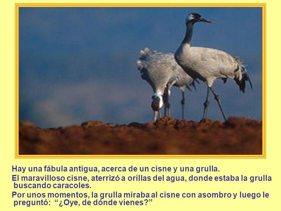 Hay una fábula antigua, acerca de un cisne y una grulla.