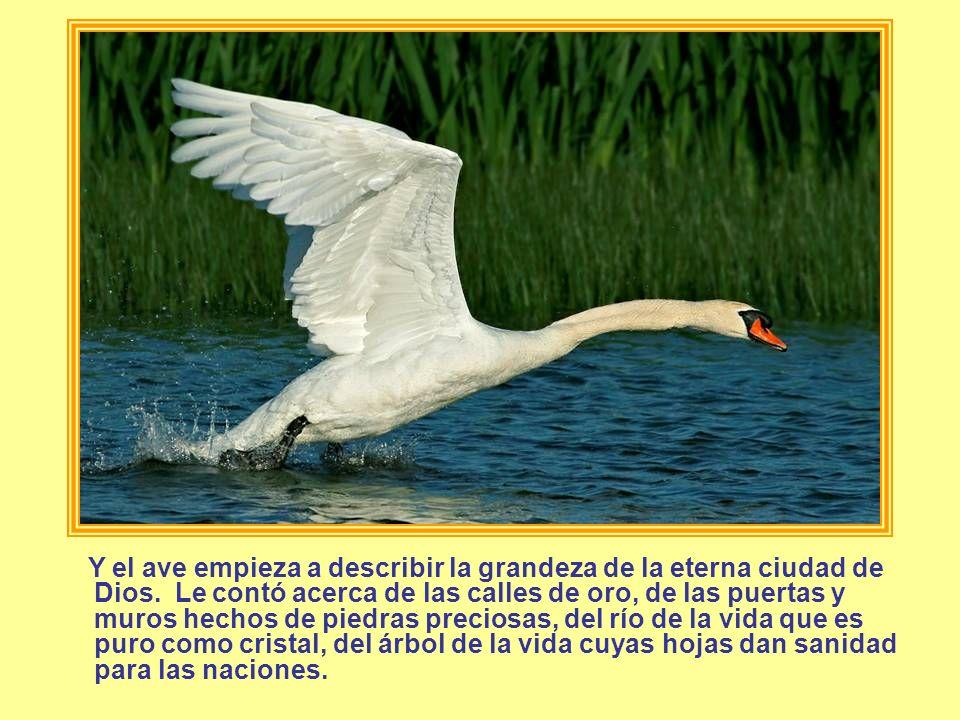 Y el ave empieza a describir la grandeza de la eterna ciudad de Dios