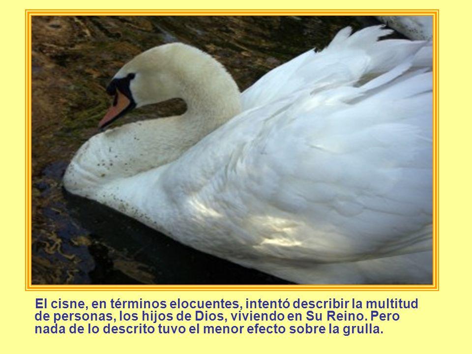 El cisne, en términos elocuentes, intentó describir la multitud de personas, los hijos de Dios, viviendo en Su Reino.